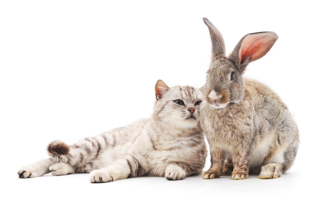 Was ist wenn es keine Katze sein soll? Natürlich gibt es auf dem Zergportal auch andere Tiere. (#03)