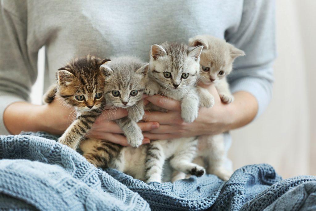 Katzenbabys gibt es nicht nur auf dem Zergportal in verschiedenen Farben, Alter und Rassen. (#01)