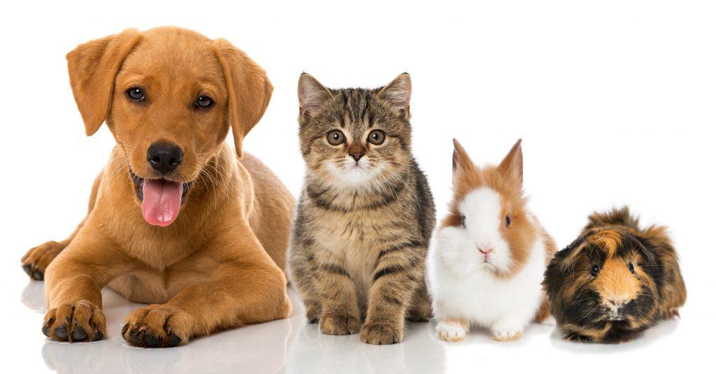Zergportal: Im Zergportal gibt es nicht nur Katzen. (#00)