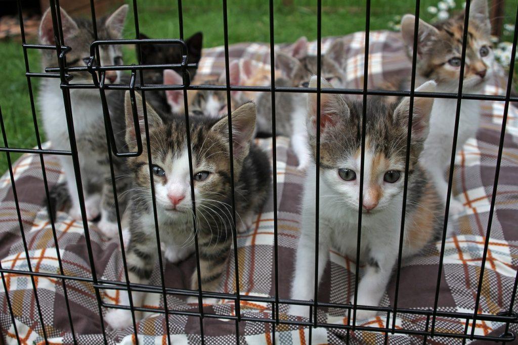 Babykatzen gibt es so viele. Da ist die Entscheidung, welche nun zu einem ziehen darf, echt schwer. (#04)
