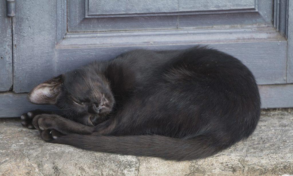 Schwarze Katzen haben es bei der Vermittlung schwer - nicht nur im Zergportal. (#03)