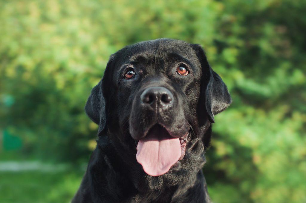 Genau wie bei den Katzen, haben es schwarze Hunde es schwer. Gerade, wenn es sich um größere Mischlinge handelt. (#07)