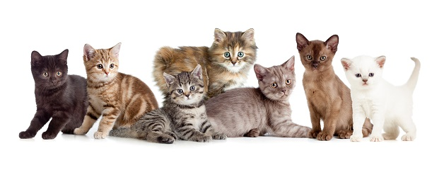 Leider gibt es immer wieder Menschen, die ihre Haustiere aussetzen, wenn sie diese nicht mehr versorgen möchten. (#01)