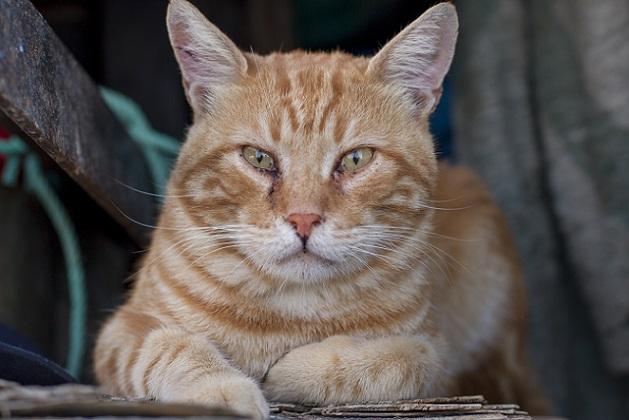 Nach der Aufnahme und Erstpflege der Fundtiere vermittelt der Katzenschutzbund in Köln die Kitten und älteren Katzen an verantwortungsvolle Personen.(#02)