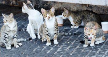 Katzen in Köln: Hier wird Tierschutz groß geschrieben