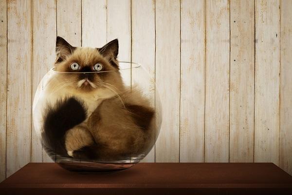 Unterschieden werden zwei verschiedene Diabetesformen, die bei einer Katze auftreten können:.(#01)