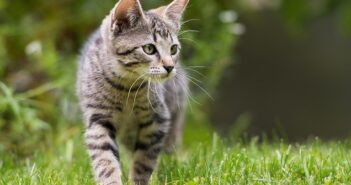 Katzendiabetes: Symptome, Ernährung & Tipps zur Behandlung