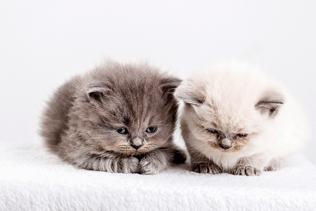 Entzückende süße und verträumte Katzenbabys (#01)