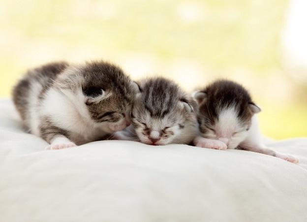 Verschlafene Katzenbabys: Als Baby braucht man halt noch viel Schlaf.(#03)