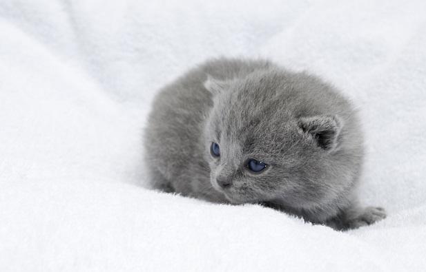 Einzelporträt eines Kätzchens. (#04)