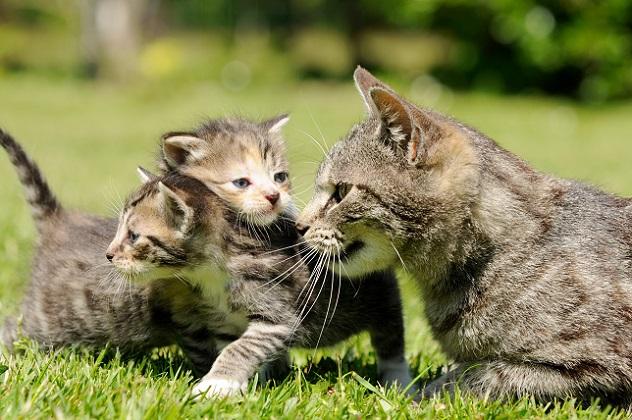 Wenn Sie mehre Katzen auf einem Bild ablichten möchten, benötigen Sie besonders viel Geduld. (#05)