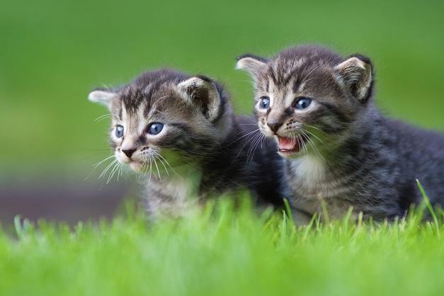 Übrigens gelingen im Freien auch Gruppenfotos von mehreren Katzen. (#06)