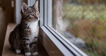 Katzenkinder: Fotos der ersten Wochen