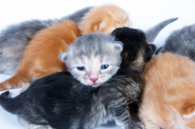 Sobald alle einen Ort zum Kuscheln gefunden haben, zücken Sie die Kamera und machen Ihre Fotos von den Kätzchen.