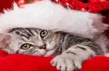 Weihnachten mit Katzen: Was beachten?