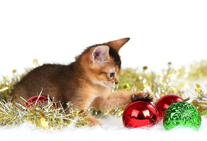 Was gibt es für die Samtpfoten Schöneres, als mit den Geschenkbändern oder dem Geschenkpapier zu spielen? (#02)