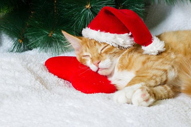 Katzen lieben Ruhe. Genau aus diesem Grund sollten Sie darauf achtgeben, dass die Samtpfoten in der Weihnachtszeit nicht so sehr gestresst werden. (#04)