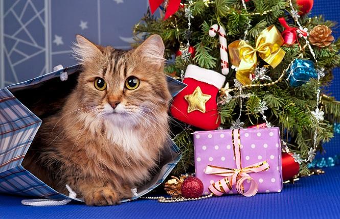 Der Duft von Tannennadeln gehört zu Weihnachten einfach dazu und sorgt für ein besonderes adventliches Ambiente. Dennoch sollten Sie darauf achten, wie ihre Katze mit den Nadeln des Baumes umgeht. Gegebenenfalls ist es sinnvoll, die Katze in der Weihnachtszeit vom Tannenbaum fernzuhalten. (#05)