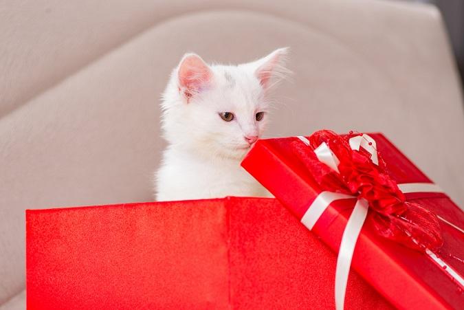 Weihnachten geht durch den Magen – und das denkt sich auch Ihr Haustier! Sie sollten unbedingt darauf achten, dass Ihre Mieze nicht an die Geflügelknochen der Weihnachtsgans oder -ente gelangt. (#06)