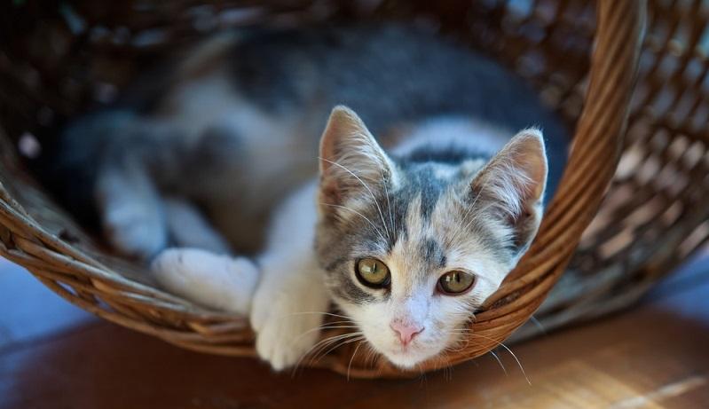 Das Fremdenzimmer entsprechend den Vorlieben der Katze eingerichtet, hat diese auch meist kein Problem damit, längere Zeit eingesperrt zu sein. Sie braucht ihr gewohntes Katzenklo und ihre Futterschüssel. (#02)