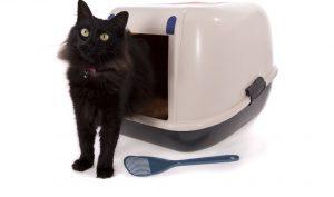 Bei einer Reise mit Katze gehören neben den typischen Urlaubsutensilien und Ihren persönlichen Gegenständen auch einige Sachen für die Samtpfote auf die Packliste. (#03)