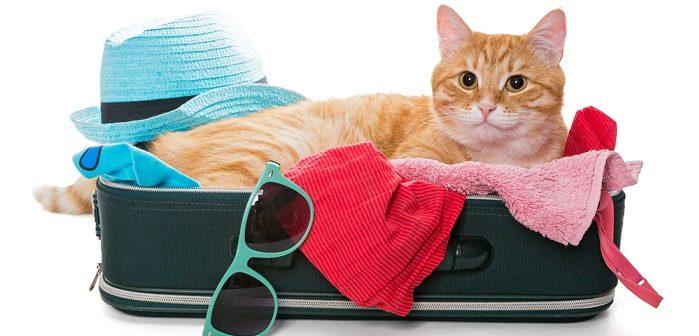 Urlaub mit der Katze: Tipps vom französischen Fremdenverkehrsamt