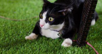 Katzen & Gurken: Schreck, lass nach!