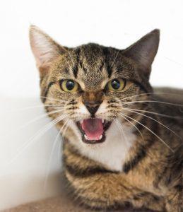 Viele Katzenhalter können den Hype um Katzen und Gurken daher gar nicht nachvollziehen und haben ein tiefenentspanntes Kätzchen daheim. (#02)