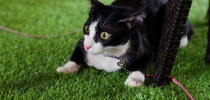 Katzen Gurken