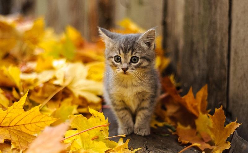 Schnurren klingt kompliziert, doch junge Katzen lernen es schon mach wenigen Tagen, sobald sich ihr neuromuskuläres System eingespielt hat. (#07)