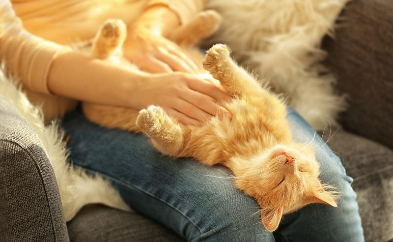 Zum Einen ist das Schnurren Teil ihres kommunikativen Verhaltens, außerdem gibt es tatsächlich das Wohlfühl-Schnurren, das den Körper des Tieres entspannt. (#01)